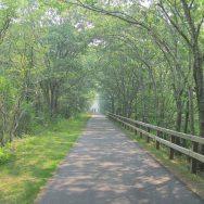 Destination Ride: Cape Cod Rail Trail