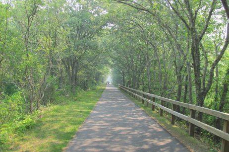 Destination Ride: Cape Cod Rail Trail